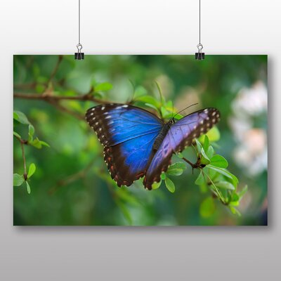 Big Box Art Butterfly No.4 No.2 Photographic Print Wrapped on Canvas