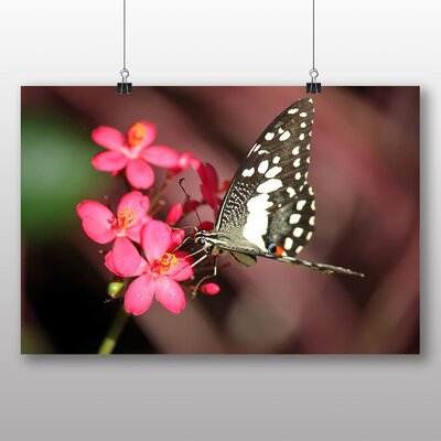 Big Box Art Butterfly No.8 Photographic Print Wrapped on Canvas