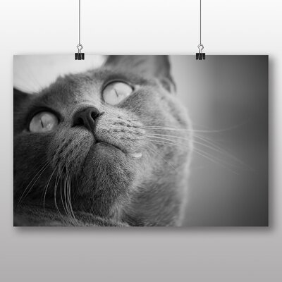 Big Box Art British Shorthair Cat No.4 Photographic Print Wrapped on Canvas