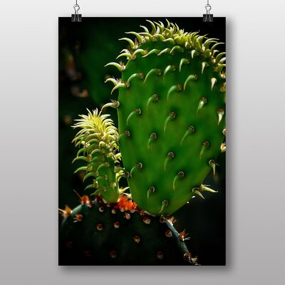 Big Box Art Cacti Cactus No.7 Photographic Print