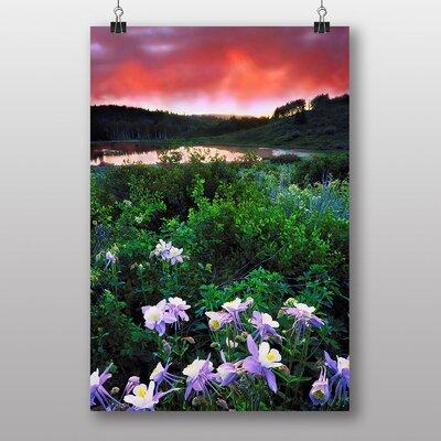 Big Box Art Columbines Colorado USA Photographic Print