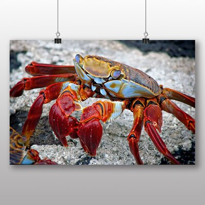 Big Box Art Crab Graphic Art Wrapped on Canvas