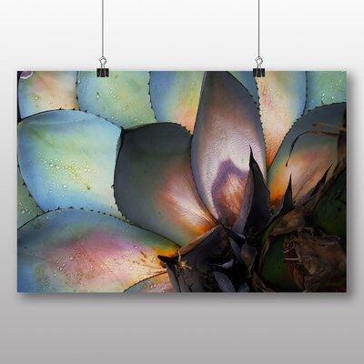 Big Box Art Cacti Cactus No.3 Photographic Print