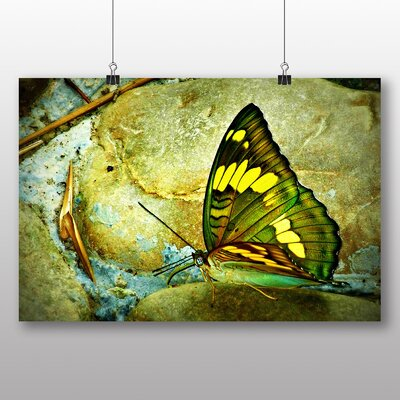 Big Box Art Butterfly No.4 Graphic Art on Canvas
