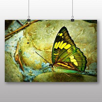 Big Box Art Butterfly No.4 Graphic Art