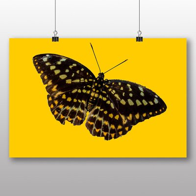 Big Box Art Butterfly No.7 Photographic Print on Canvas