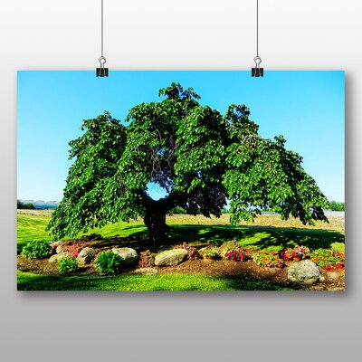 Big Box Art Camperdown Elm Tree Photographic Print on Canvas