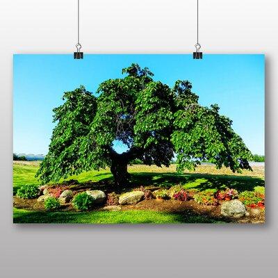 Big Box Art Camperdown Elm Tree Photographic Print