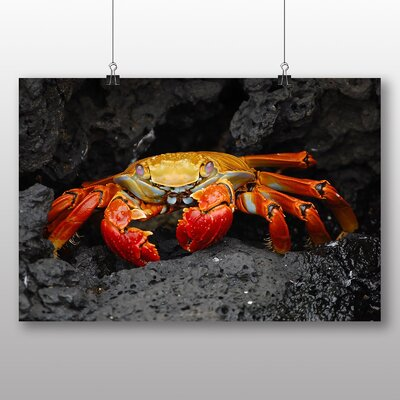 Big Box Art Crab No.2 Photographic Print Wrapped on Canvas