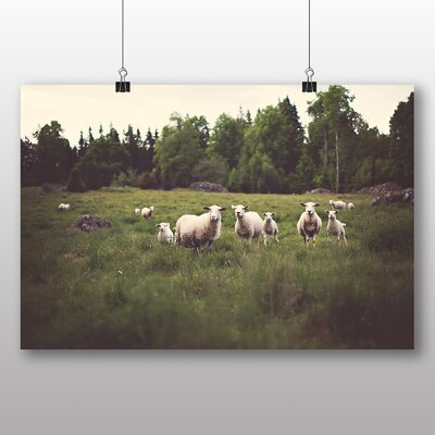 Big Box Art Curious Sheep Photographic Print