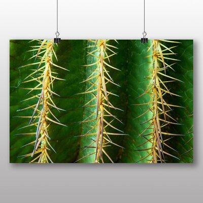 Big Box Art Cacti Cactus No.6 Photographic Print on Canvas