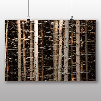 Big Box Art Deep Forest Wood Trees No.1 Photographic Print on Canvas