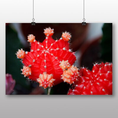 Big Box Art Colourful Cactus Flower No.2 Photographic Print on Canvas