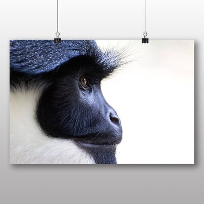 Big Box Art Colobus Monkey Photographic Print Wrapped on Canvas