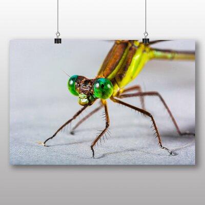 Big Box Art Dragonfly No.2 Photographic Print