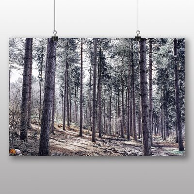 Big Box Art Conifer Forest Photographic Print on Canvas