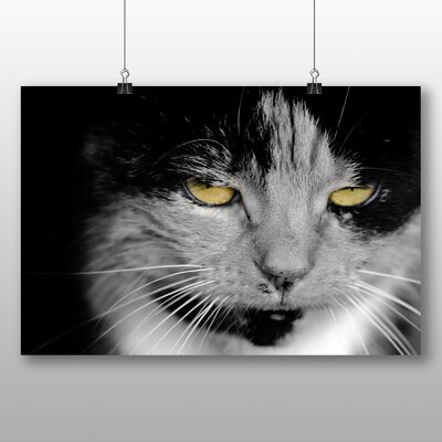 Big Box Art Cat Eyes No.2 Photographic Print