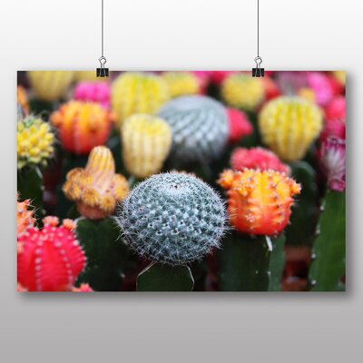 Big Box Art Colourful Cactus Flower No.3 Photographic Print Wrapped on Canvas