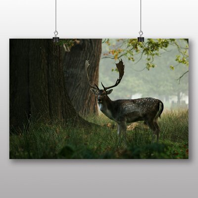 Big Box Art Deer Stag Photographic Print Wrapped on Canvas