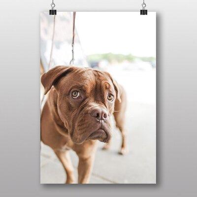 Big Box Art 'Dogue de Bordeaux' Photographic Print