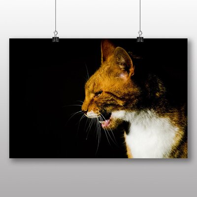 Big Box Art Cat No.4 Photographic Print Wrapped on Canvas