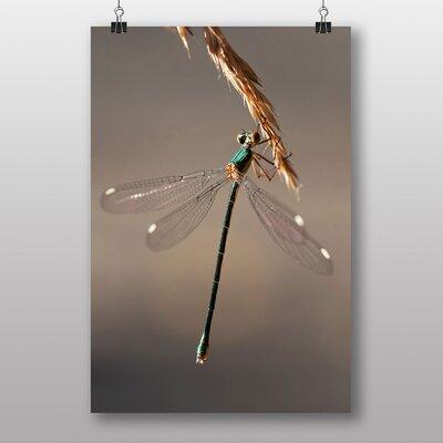 Big Box Art Dragonfly Photographic Print