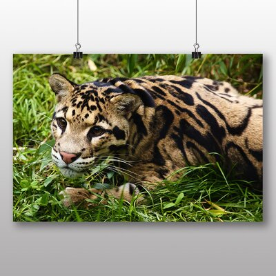 Big Box Art Clouded Leopard Photographic Print Wrapped on Canvas