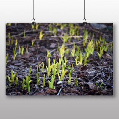 Big Box Art Early Spring Shoots of Grass Photographic Print on Canvas