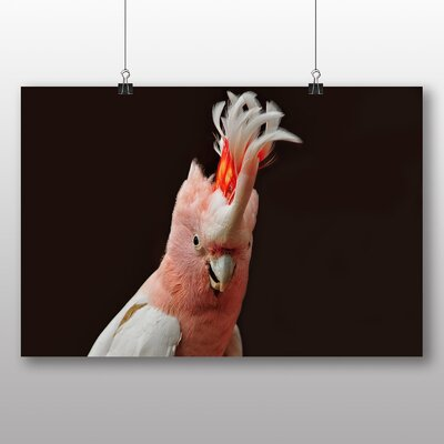 Big Box Art Cockatoo Photographic Print