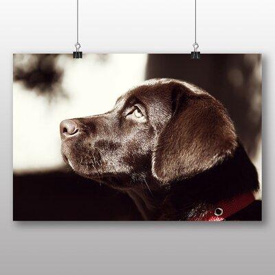 Big Box Art Chocolate Labrador Dog Photographic Print