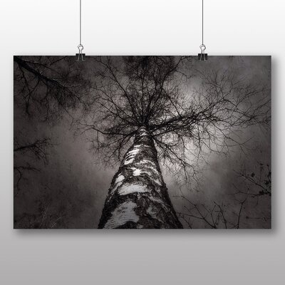 Big Box Art Birch Tree No.4 Graphic Art Wrapped on Canvas