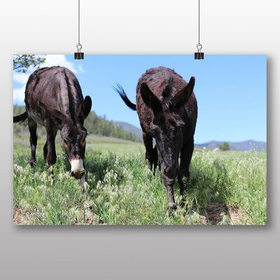 Big Box Art Donkeys Photographic Print on Canvas