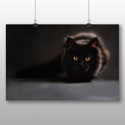 Big Box Art Cat No.1 Photographic Print Wrapped on Canvas