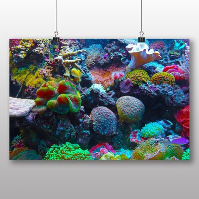 Big Box Art Coral Reef Fish No.5 Photographic Print