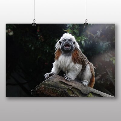 Big Box Art Cotton Top Tamarin Photographic Print Wrapped on Canvas