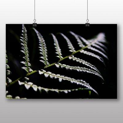 Big Box Art Fern Line Photographic Print Wrapped on Canvas