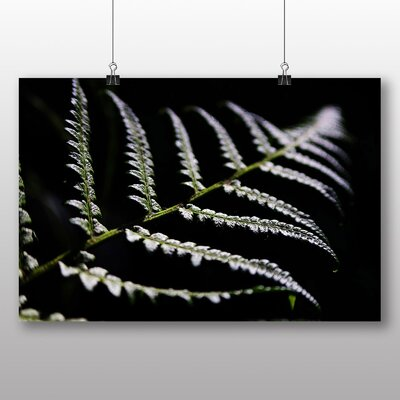 Big Box Art Fern Photographic Print