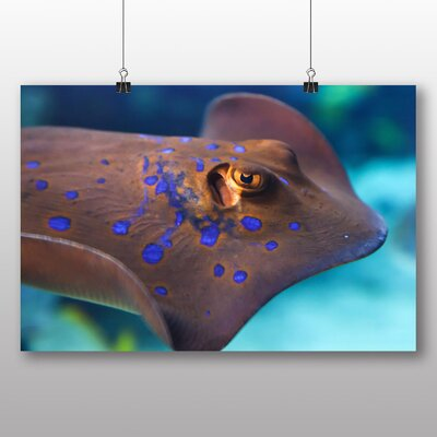 Big Box Art Bull Ray Fish Graphic Art on Canvas