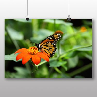 Big Box Art Butterfly No.2 No.2 Photographic Print Wrapped on Canvas
