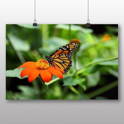 Big Box Art Butterfly Photographic Print