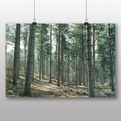 Big Box Art 'Conifer Tree Forest' Photographic Print