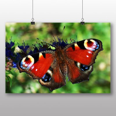 Big Box Art Butterfly Photographic Print Wrapped on Canvas