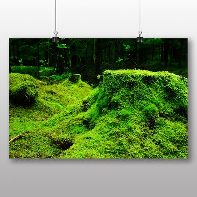 Big Box Art Forest Moss Norway Photographic Print Wrapped on Canvas