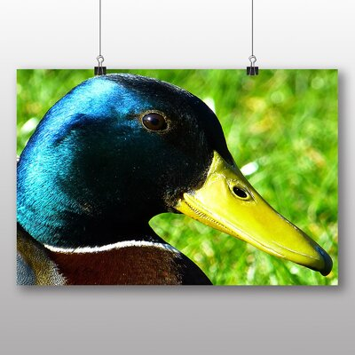 Big Box Art Duck Photographic Print Wrapped on Canvas