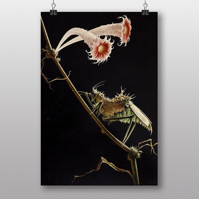 """Big Box Art """"Insect and Flower"""" by Franz Sedlacek Photographic Print"""