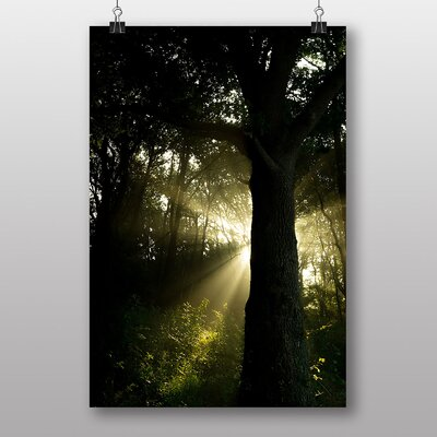 Big Box Art 'Forest and the Ray of Sunshine' Photographic Print