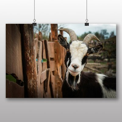 Big Box Art Goat No.3 Photographic Print on Canvas