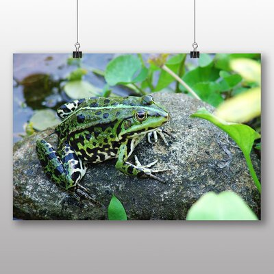 Big Box Art Frog Photographic Print Wrapped on Canvas