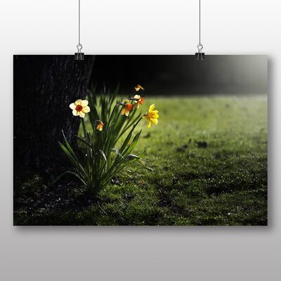 Big Box Art Daffodils Flowers Photographic Print on Canvas