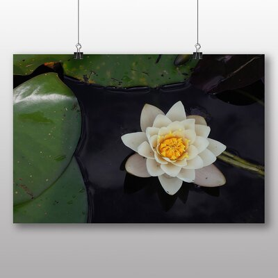 Big Box Art Flower and Pond Photographic Print on Canvas